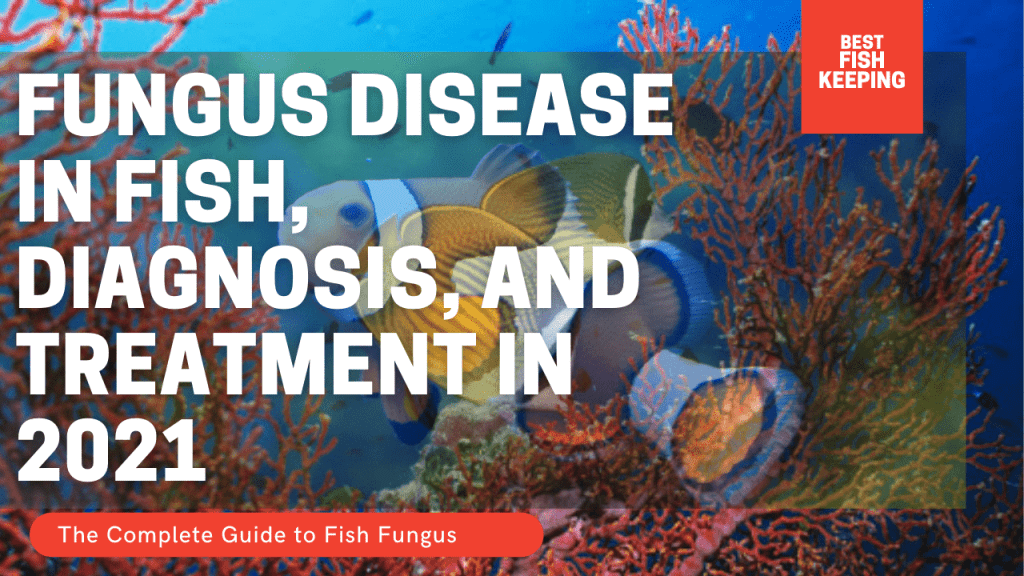 Fungus Disease In Fish, Diagnosis, And Treatment in 2021