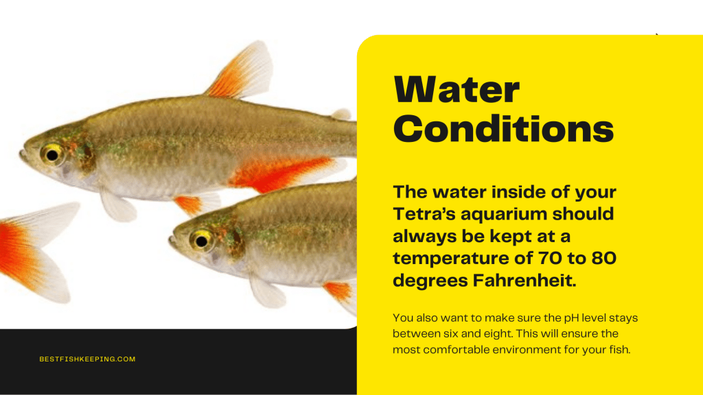 water conditions for bloodfin tetra