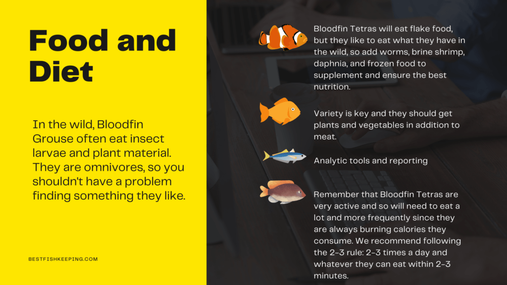 food and diet of bloodfin tetra