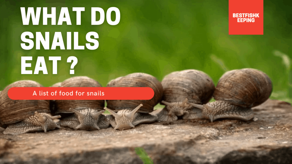 food for snails