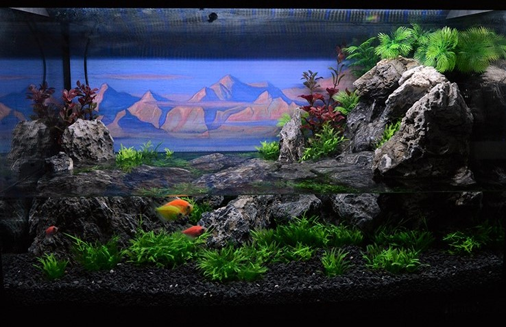 How Long Does It Take To Establish A Nitrogen Cycle In a Freshly Started Aquarium