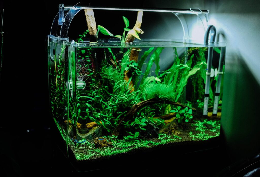 Tips for Beginner Aquarists
