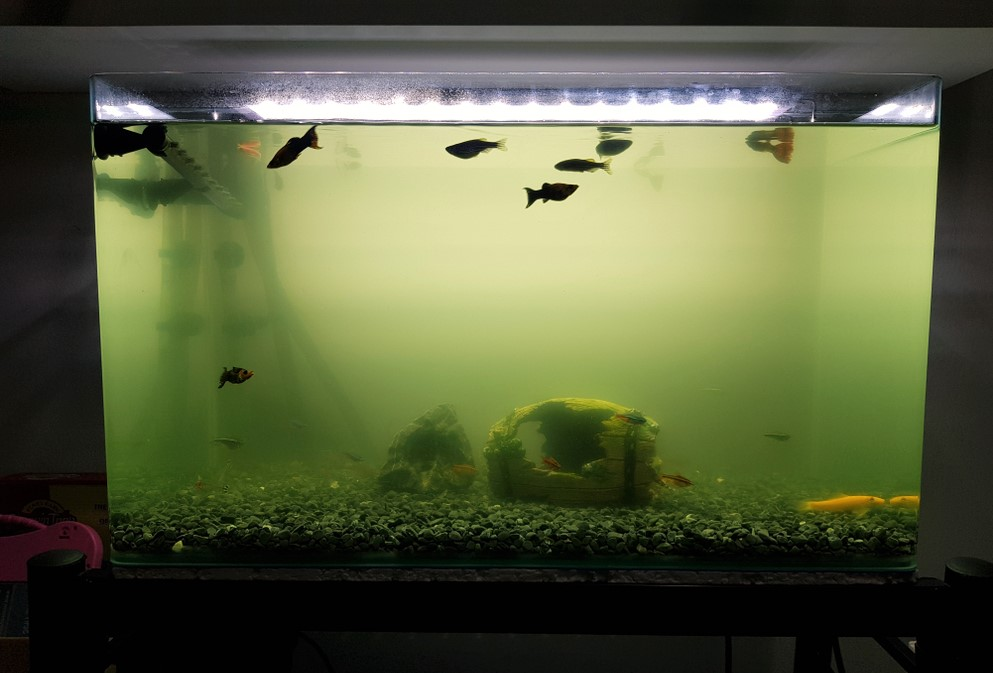 What To Do If The Water Becomes Cloudy in Fish Tank