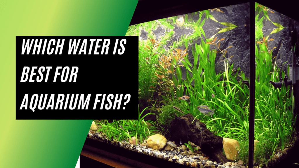 Which Water Is Best For Aquarium Fish