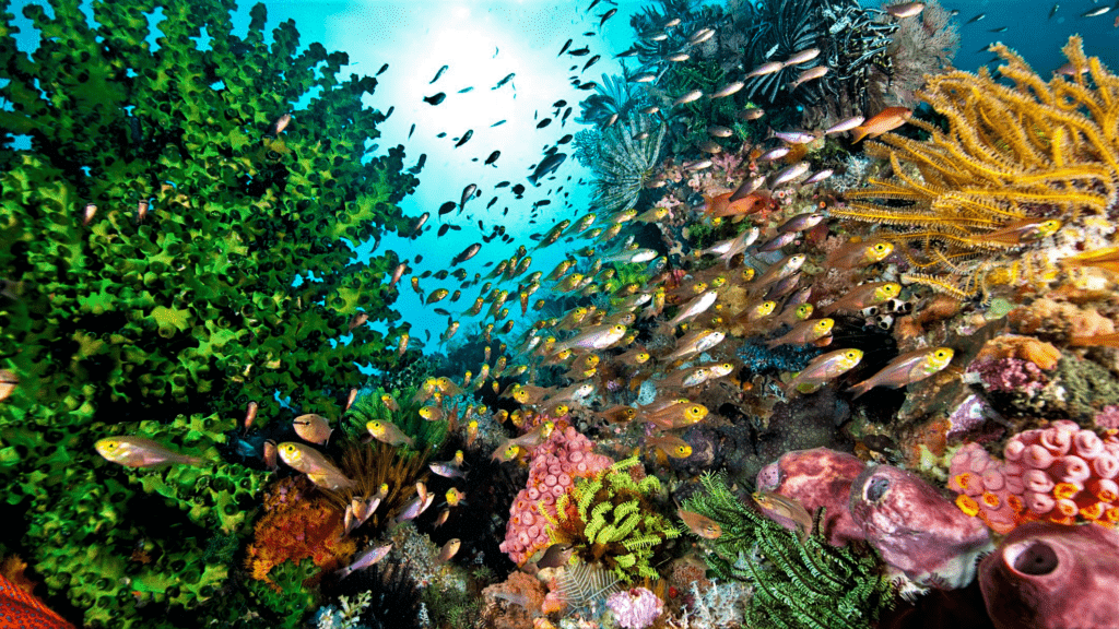 What is the Best Temperature for Coral Growth Work?