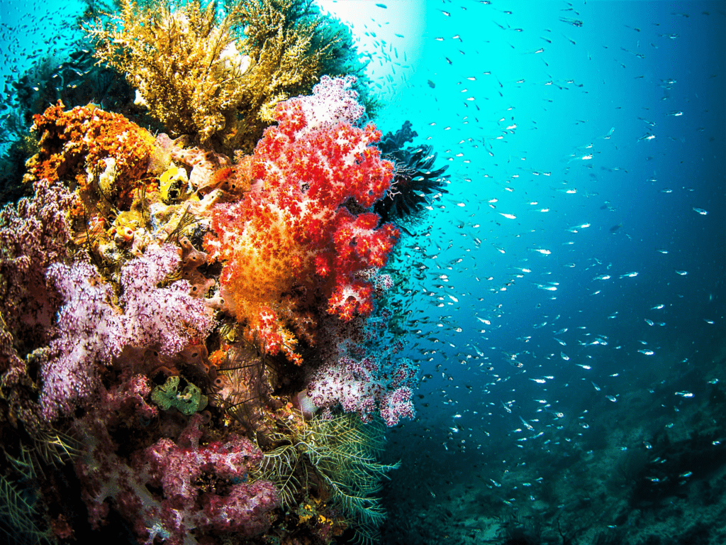 Can Coral Grow in a Human Body?